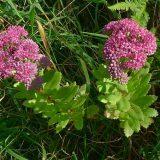 C4植物とCAM植物の共通点と違い