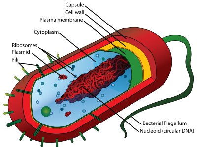 原核細胞・真核細胞・ウィルスの違い