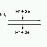 補助因子-補酵素-