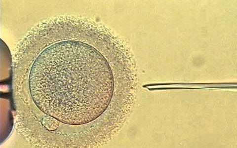 生命の始まりが神秘的すぎる!受精の瞬間の映像【動画まとめ】