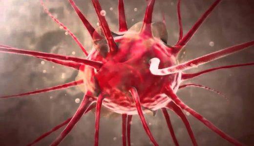 動物の結合組織-軟骨組織・骨組織・血液・繊維性結合組織-