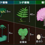 系統-植物界-