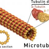 微小管による運動-鞭毛の構造と曲がる仕組み-