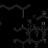 伸長成長・様々な生理反応-ブラシノステロイド-