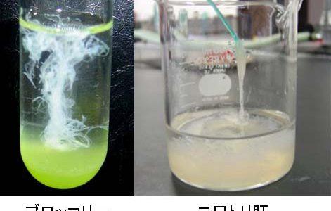 【簡単】誰でも自宅でできるDNA抽出実験方法