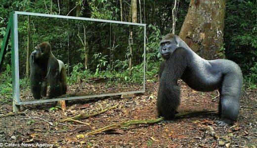 [動画]動物に鏡を見せたら…