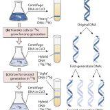 [論述]熱変性させたDNAを徐々に冷却