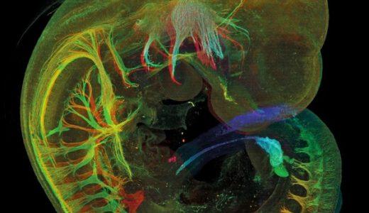 美しすぎる蛍光顕微鏡写真