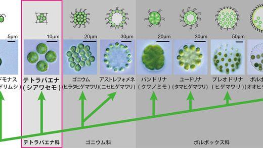 生物の変遷まとめ-多細胞生物~ほ乳類-