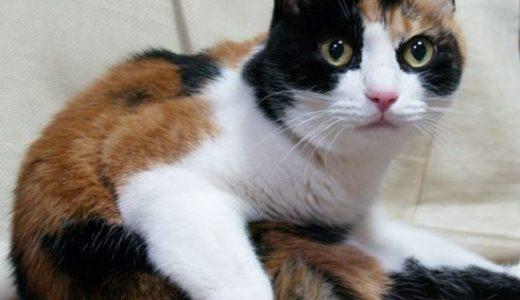 エピジェネクス-三毛猫-