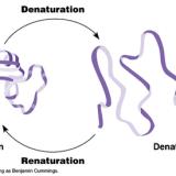タンパク質の変性観察
