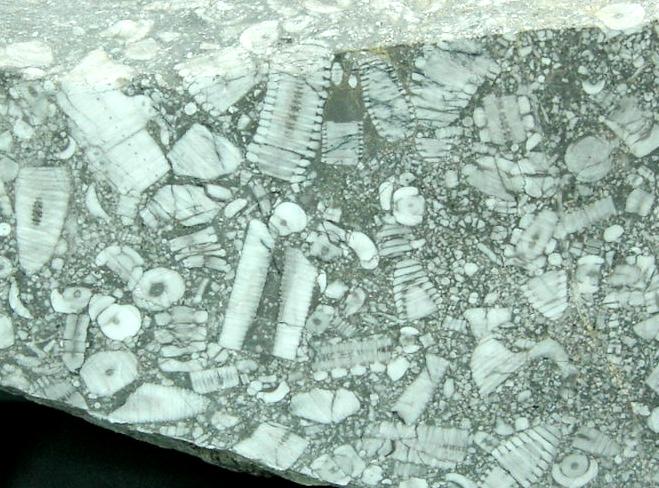 ウミユリ石灰岩