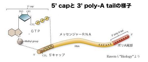 RNA修飾