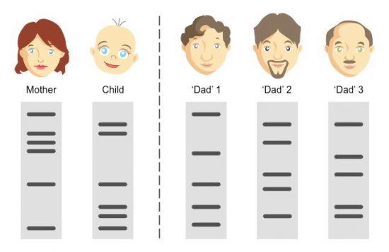 DNA型鑑定
