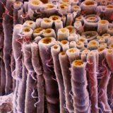 美しすぎる電子顕微鏡写真3