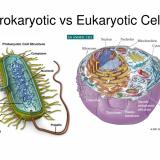 原核生物(原核細胞)と真核生物(真核細胞)の遺伝子発現の違い