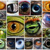 様々な動物の目-カメラ目・単眼・複眼-