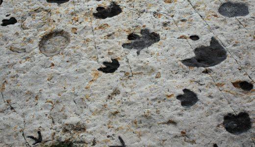 生痕化石とは?
