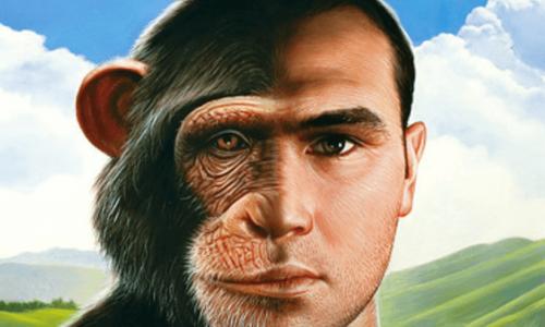 チンパンジーvsヒトの記憶力テストがおもしろい
