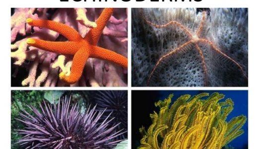 棘皮動物の構造と生態