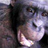 笑うのは人間だけではない。サルも笑うことが判明!