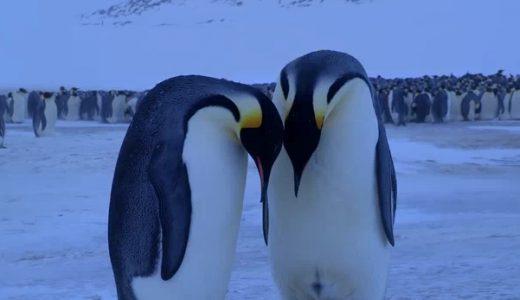 無慈悲な現実の前に立ち尽くす皇帝ペンギン夫婦の姿が悲しすぎる