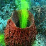 【マニアック】海水に色をつけてカイメン内の水の移動を視覚化した映像がすごい