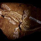 ほぼ完全な形で発掘された「Orobates pabsti」の化石を使ってその歩行パターンの解明に成功