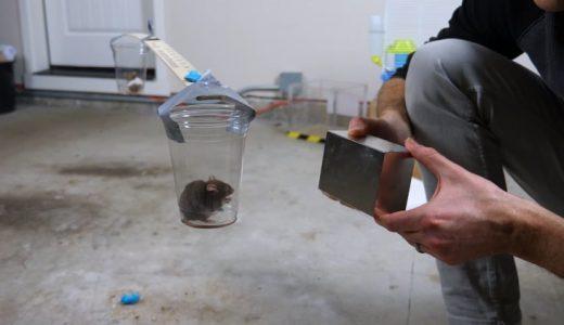 マウスに最大の磁力を持つ巨大ネオジウム磁石を近づけるとどうなる??