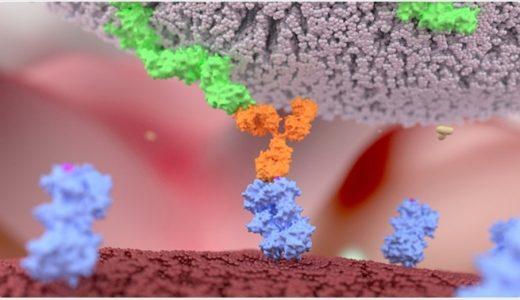 【マニアック】ナチュラルキラー細胞が癌細胞を破壊する仕組みを説明する動画がわかりやすい