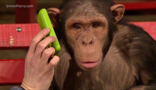 猿にマジックを見せるとどうなるの?