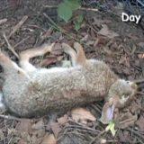 【閲覧注意】自然の驚異の分解力。死んだウサギが骨になるまでのタイムラプス映像