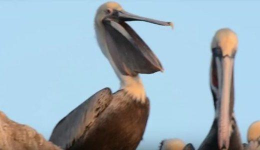 【Q&A】鳥もあくびをするの?