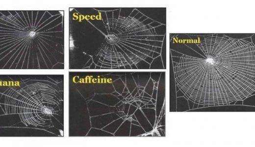 【Q&A】蜘蛛にカフェインを飲ませるとどうなる?