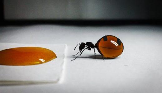 腹パンパンになるまで蜜を溜めるミツツボアリの映像