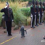 ノルウェーのペンギンが騎士の称号を与えられるも訳がわからなそうな顔をしている