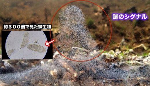 水槽内に田んぼの土などを入れてどのような微生物が生息しているか調べてみた映像が面白い