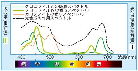 吸収スペクトルと作用スペクトルの違い