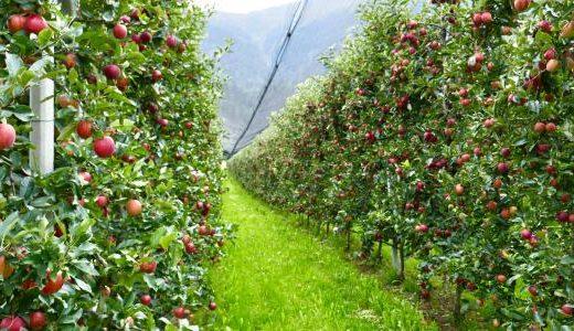 【Q&A】生物農薬って何?