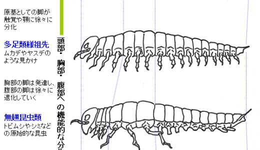 【Q&A】昆虫の触覚や顎は何が進化してできたもの?