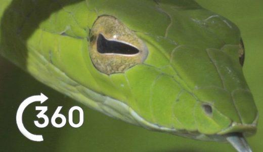 まるで現地にいるみたい!コスタリカのジャングルの360°映像