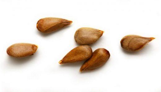 種子と胞子の違いとは-種子植物・シダ植物・コケ植物-