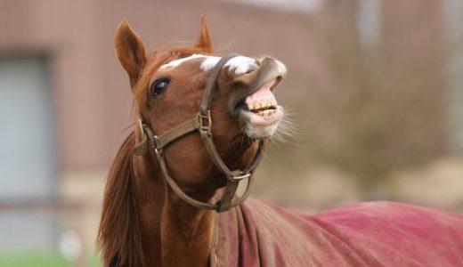 【Q&A】馬のフレーメンにはどのような意味があるの?