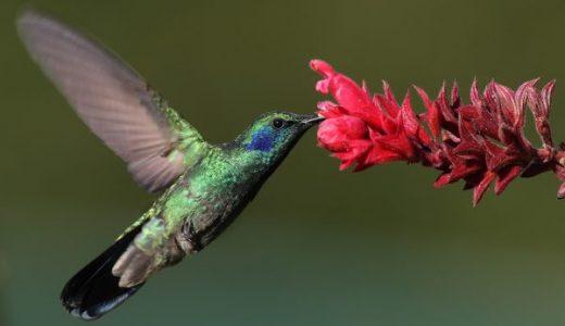 【Q&A】後ろ向きに飛行できる鳥はいるの?