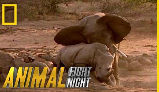 ゾウとサイはどっちの方が強い?野生の戦いを撮影してみた