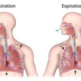異化の種類まとめ-呼吸・発酵・腐敗の違い-