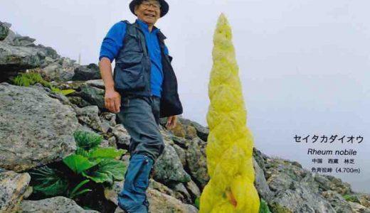 【Q&A】温室植物レウム・ノビレってどんな生物?
