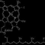 光合成色素の種類と生物種の関係まとめ