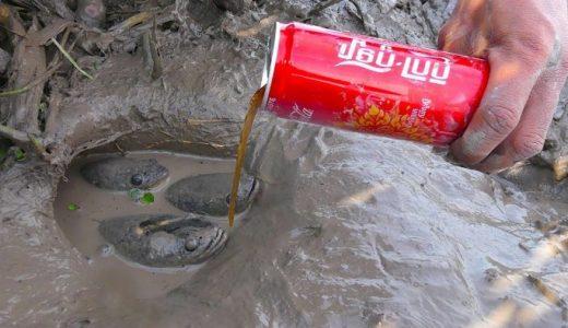 コーラを使って穴の底にいるナマズなどの魚を捕獲する方法