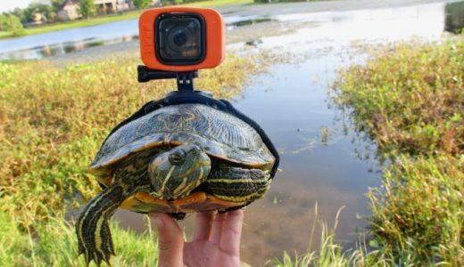 カメの背中にGoProを装着しカメ視点からの映像を撮影してみた